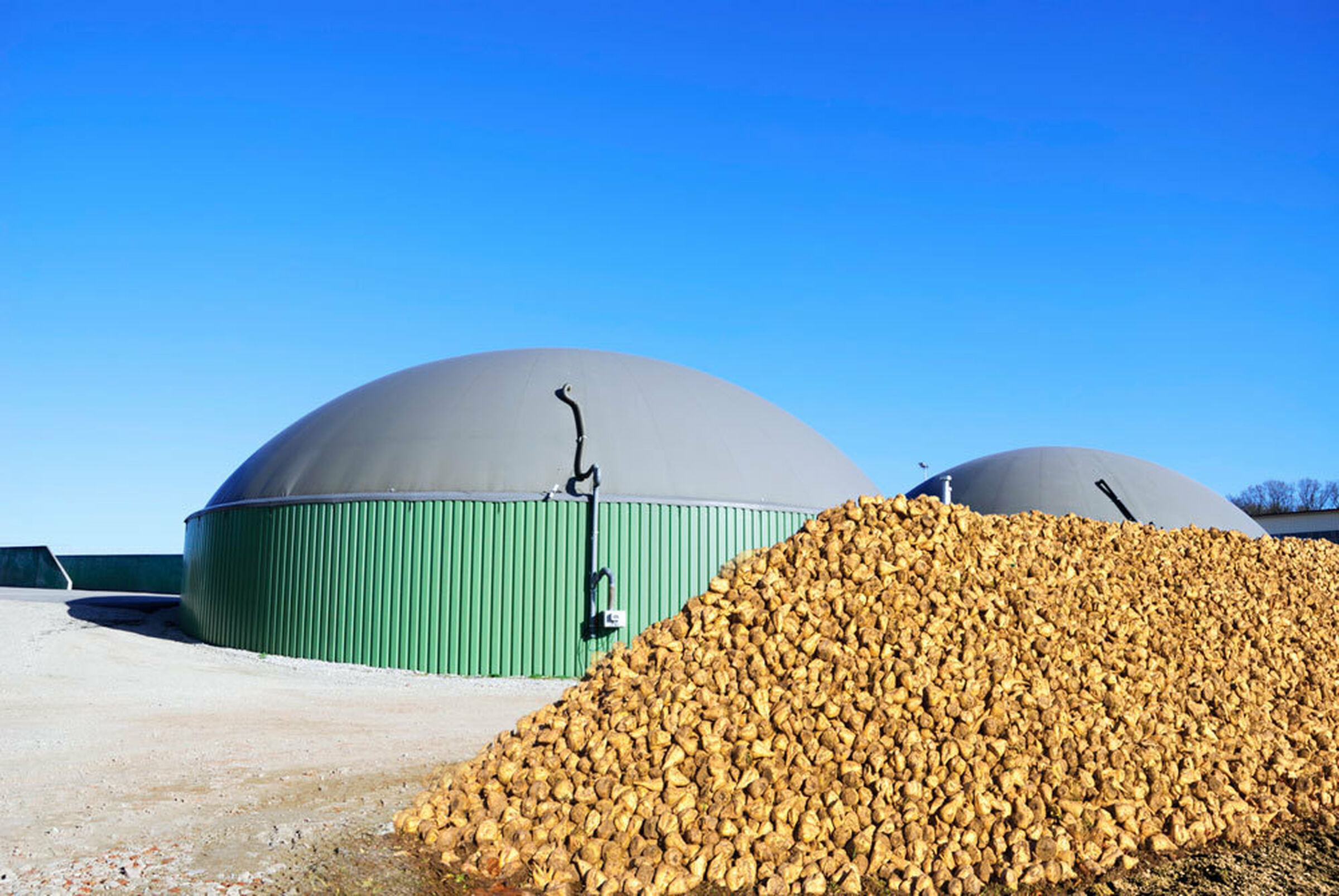 Beet Pile In Front Of Biogas Installation